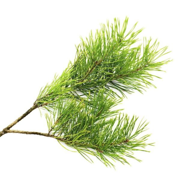 Seedripuu eeterlik õli 20 ml-100 ml